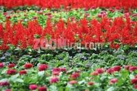 28052009_flora_art_bundek_zg_fotosasa_cetkovic_