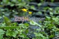 u_sumi_cvijet