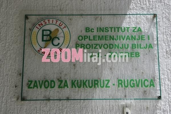 13062006 bc institut za oplemenjivanje i proizvodnju bilja zavod za kukuruz rugvica zg foto sasa cetkovic