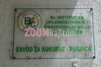 13062006_bc_institut_za_oplemenjivanje_i_proizvodnju_bilja_zavod_za_kukuruz_rugvica_zg_foto_sasa_cetkovic